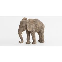 Elephant Arabela